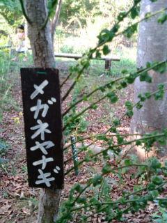 南伊豆自然植物園
